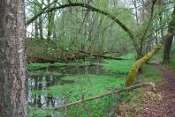 Le canal à Bernistap au début du printemps
